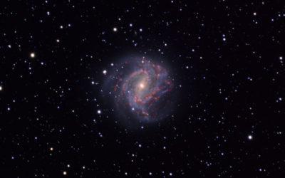 DS-M83