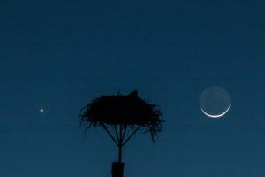 Moon-Venus-Osprey-Moon