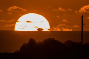 Sun-Seagull Sunrise Kingscliff